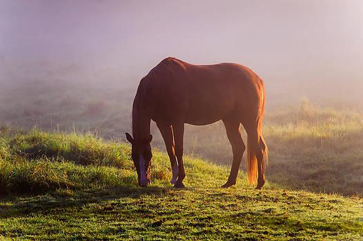 Jenny Rainbow - Horse in the Foggy Field