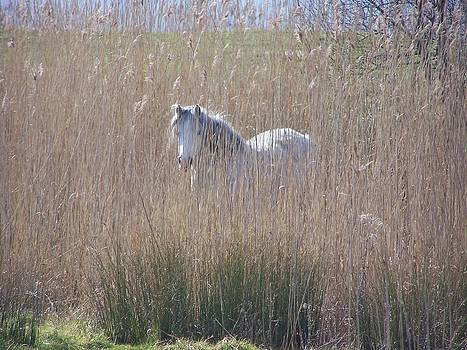 Horse in the grass by Christopher Rowlands