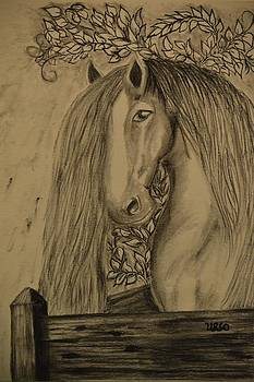 Maria Urso  - Horse in the Paddock