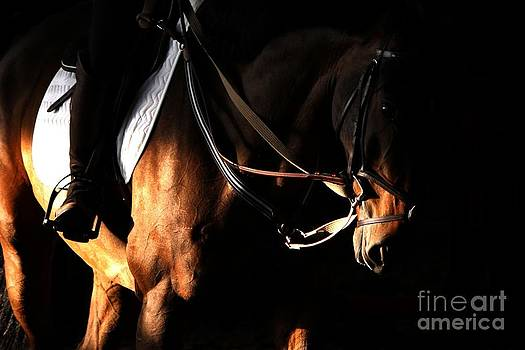 Janice Byer - Horse in the Shade