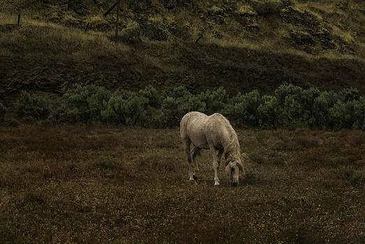 Horse by Jean-Jacques Thebault