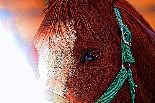 Joe Bledsoe - Horse