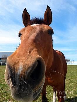 Christine Stack - Horse Kisses