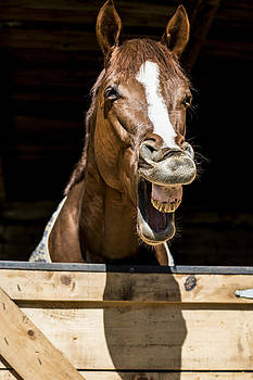 Newnow Photography By Vera Cepic - Horse laugh