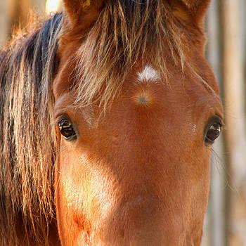 Art Block Collections - Horse Look