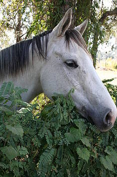 Horse by Petra Skerritt