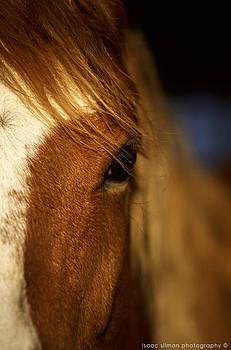 Isaac Silman - horse portrait