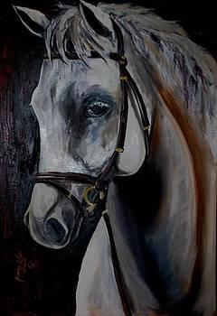 Horse Portret by Burduja Olesea