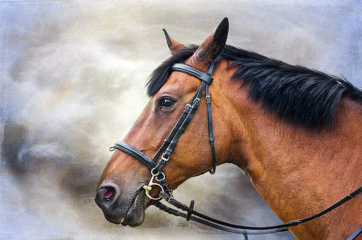 Horse profile by Trevor Wintle
