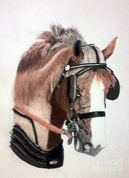 Horse by Rajendra Parekh