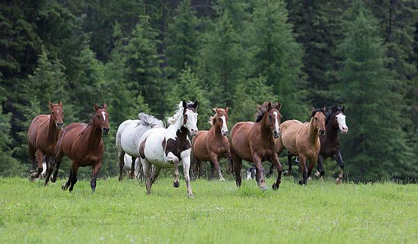 Dee Carpenter - Horse Round-Up