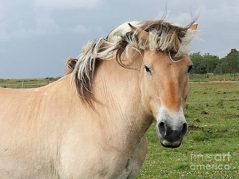Horse by Sara  Meijer