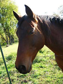 Horse by Sarah Manspile