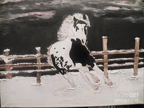 Horse  by Shairozion Erickson