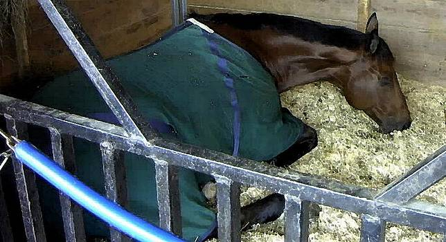 Horse Show Taking A Nap  by Olde Time  Mercantile