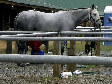 Horse Show Wash Stall by Olde Time  Mercantile