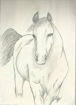 Horse Sketch by Saleem Baig