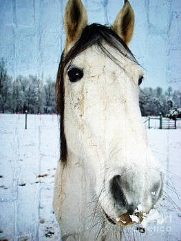Horse Snow Struck by Crissy Anderson