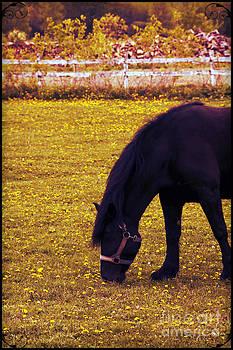 Sophie Vigneault - Horse