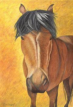 Horse Stare by Carol De Bruyn