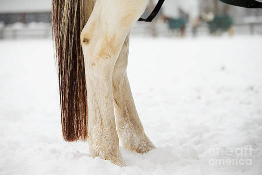 Horse Tail by Mary  Smyth