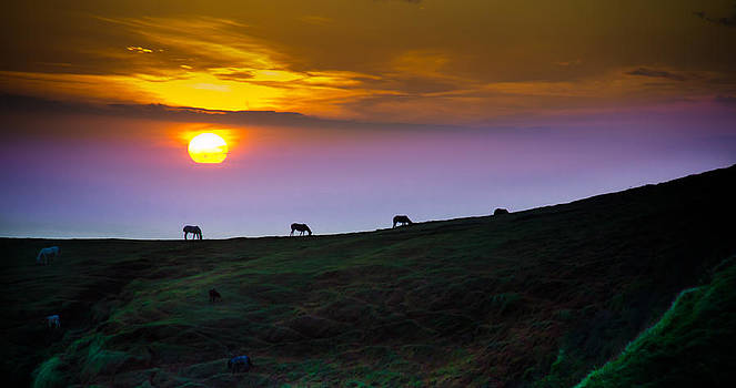 Horsed on the Purple Hillside by William Shevchuk