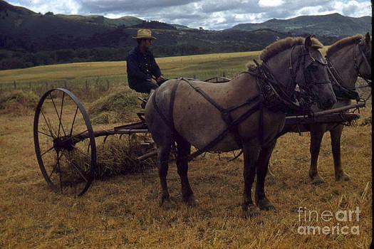 California Views Mr Pat Hathaway Archives - Horsedrawn Harvester hay rake on the Berta Ranch Carmel Valley California circa 1950