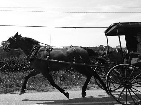 Horsepower 2 by Tami Bush