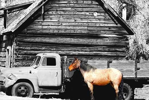 Horsepower by Peter Kotzbach