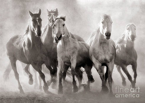 Horses and Dust by Heather Swan