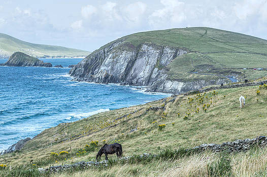 Horses at Dingle Peninsula Ireland by James Gordon Patterson
