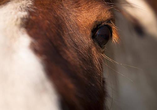 Horse's eye by David Isaacson