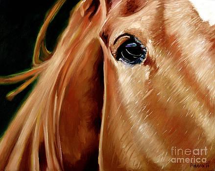 Horses Eye by Phil Hawn