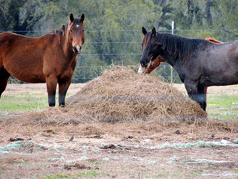 Horses Having Some Hay by Kim Pate