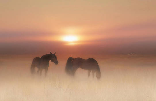 Horses in a misty dawn by Valerie Anne Kelly
