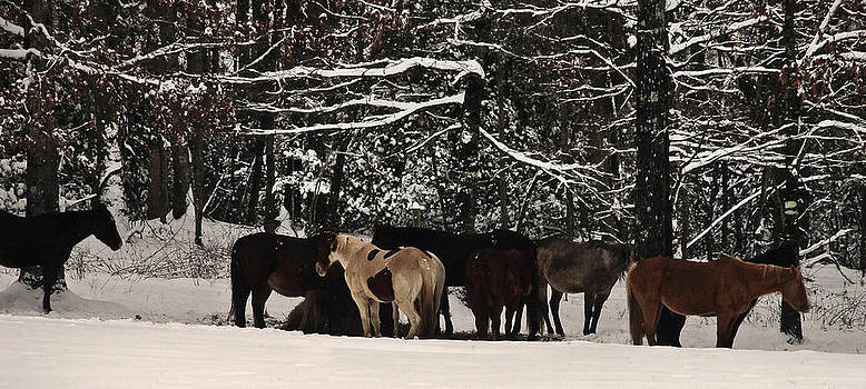 Horses In Snow by Tanya Jacobson-Smith