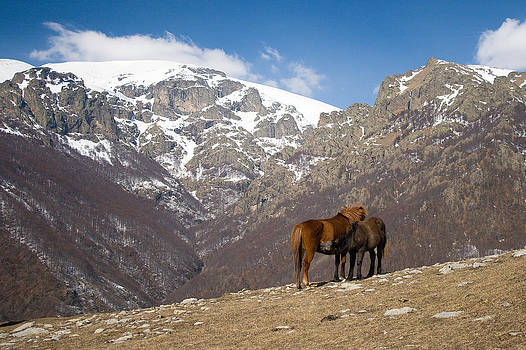 Horses in the mountain by Peter Til