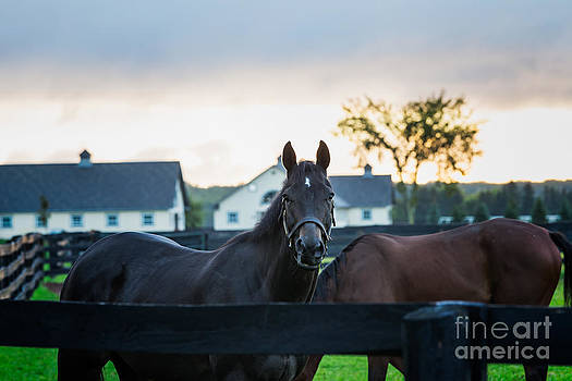 Horses In The Paddock by Mary  Smyth