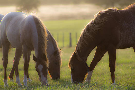 Horses in the Pasture by Mamie Thornbrue