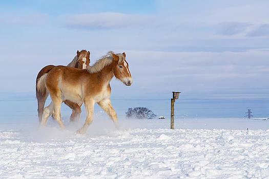 Horses in the Snow by Mark Van Scyoc
