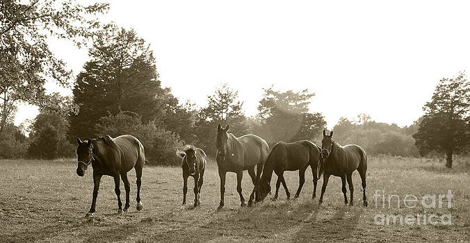 Horses in the Sun by John Debar