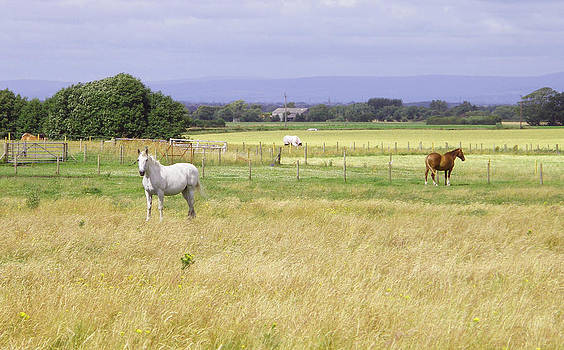 Horses in the sunshine by Moya Moon