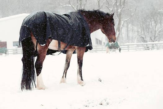 Horses In Winter by Mary  Smyth