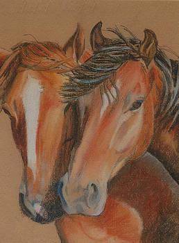 Horses looking at you by Teresa Smith