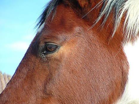 Horses of Montana by Yvette Pichette