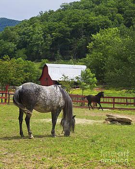 Jill Lang - Horses on a Farm