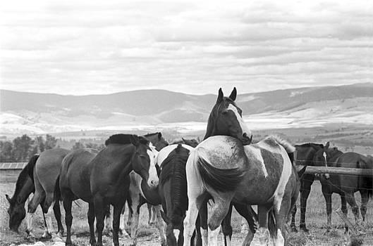 Harold E McCray - Horses on Prairie