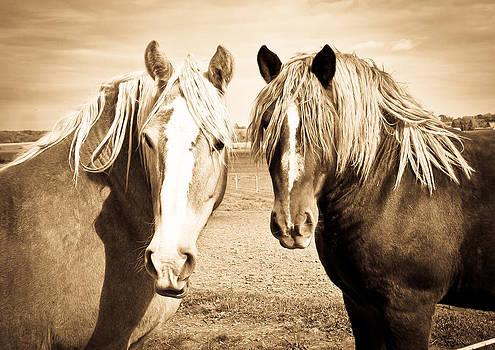 Horses  by Paulina Szajek
