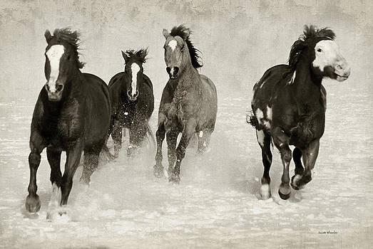 Scott Wheeler - Horses Run Free