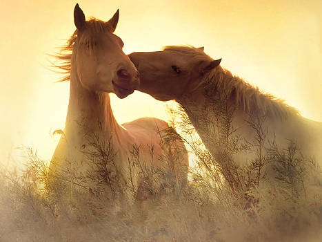 Horses tenderness by Lila Shravani